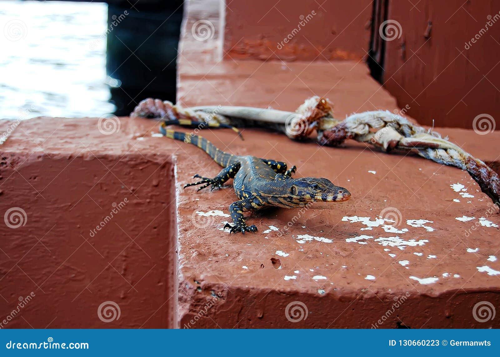Cais do lago lizard