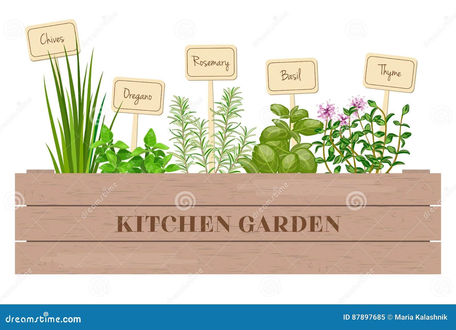 Planter Dans Une Caisse En Bois caisse en bois d'herbes à cuire fraîches avec des labels