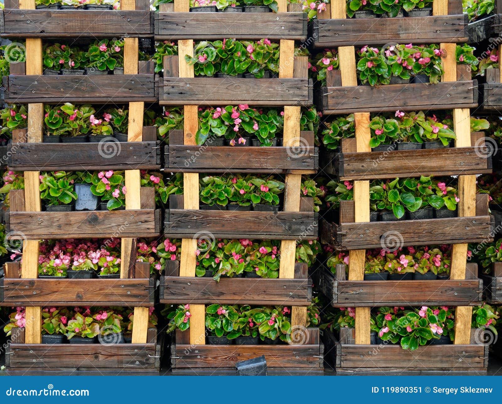 Planter Dans Une Caisse En Bois caisses en bois avec des fleurs image stock - image du