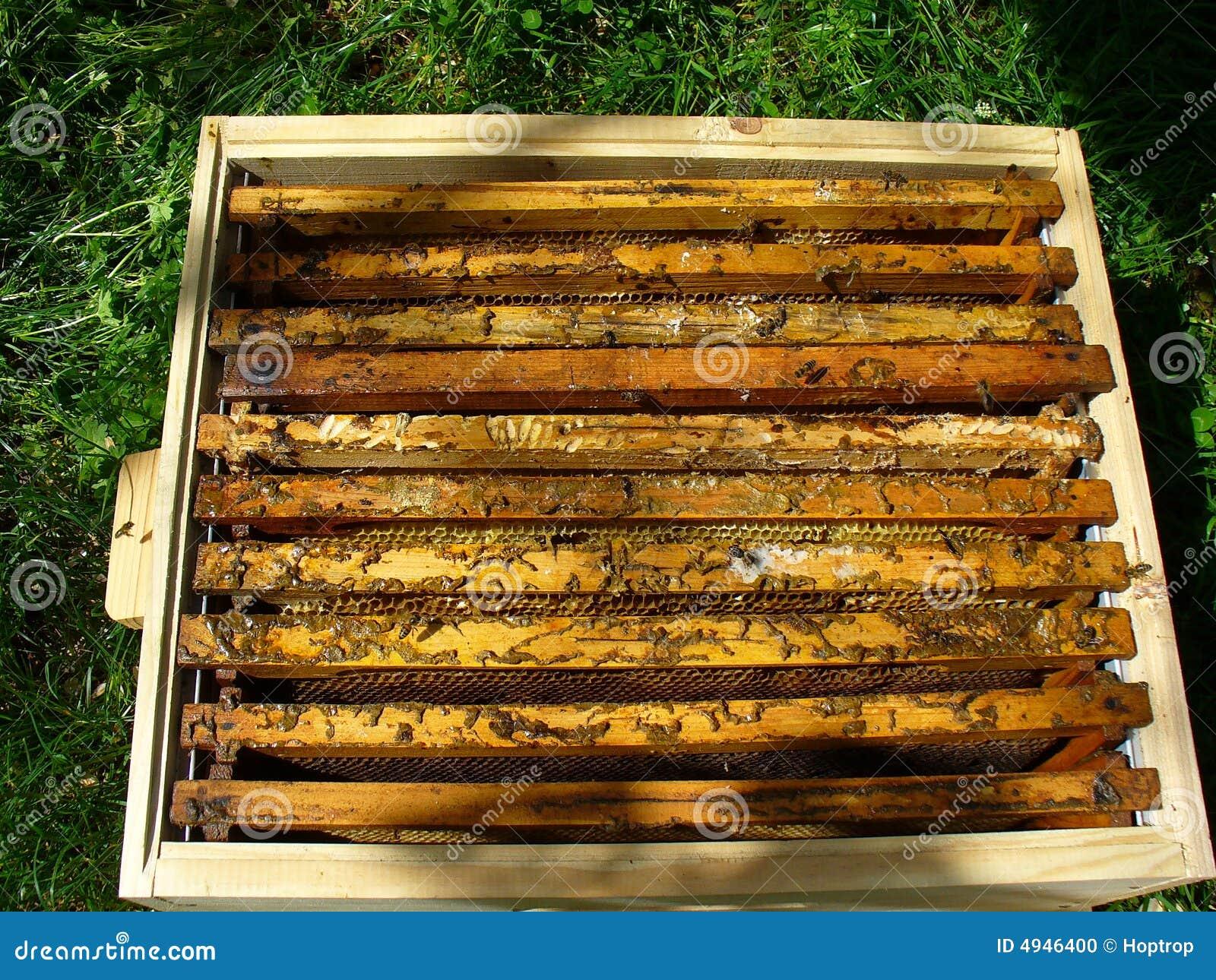 Caixa 3 Da Abelha Foto de Stock Imagem: 4946400 #B98912 1300x1065