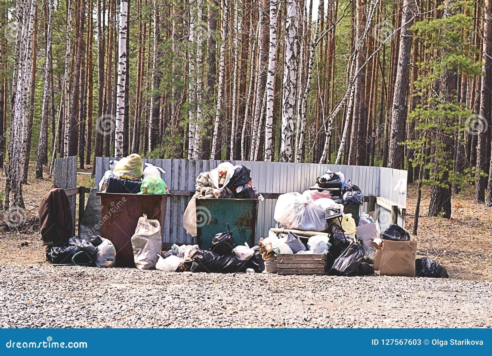Caixa de maca completamente do lixo no conceito da floresta do problema da ecologia