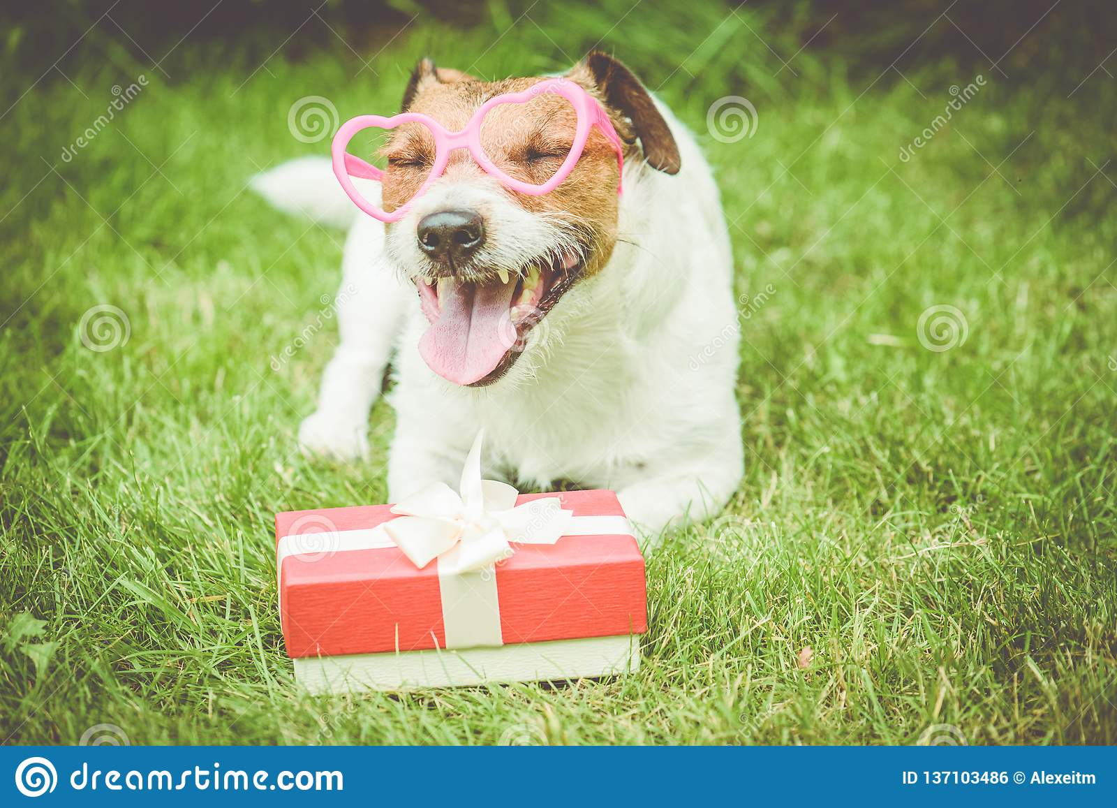 Caja de regalo del día de tarjeta del día de San Valentín al lado de los vidrios en forma de corazón que llevan del perro feliz