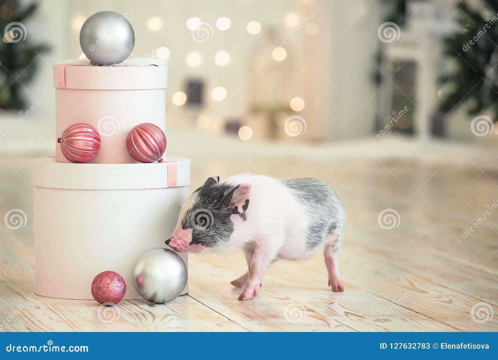 Cajas de la Navidad redondas grandes al lado de un pequeño cerdo manchado, un símbolo del Año Nuevo