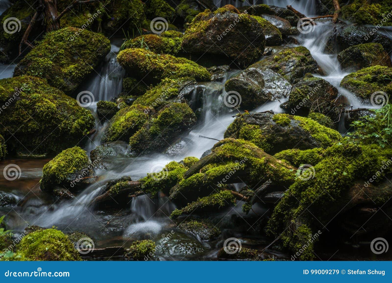 Cala cubierta de musgo