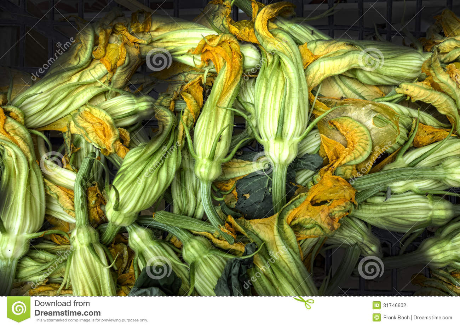 Calabacines o flores frescos del calabacín