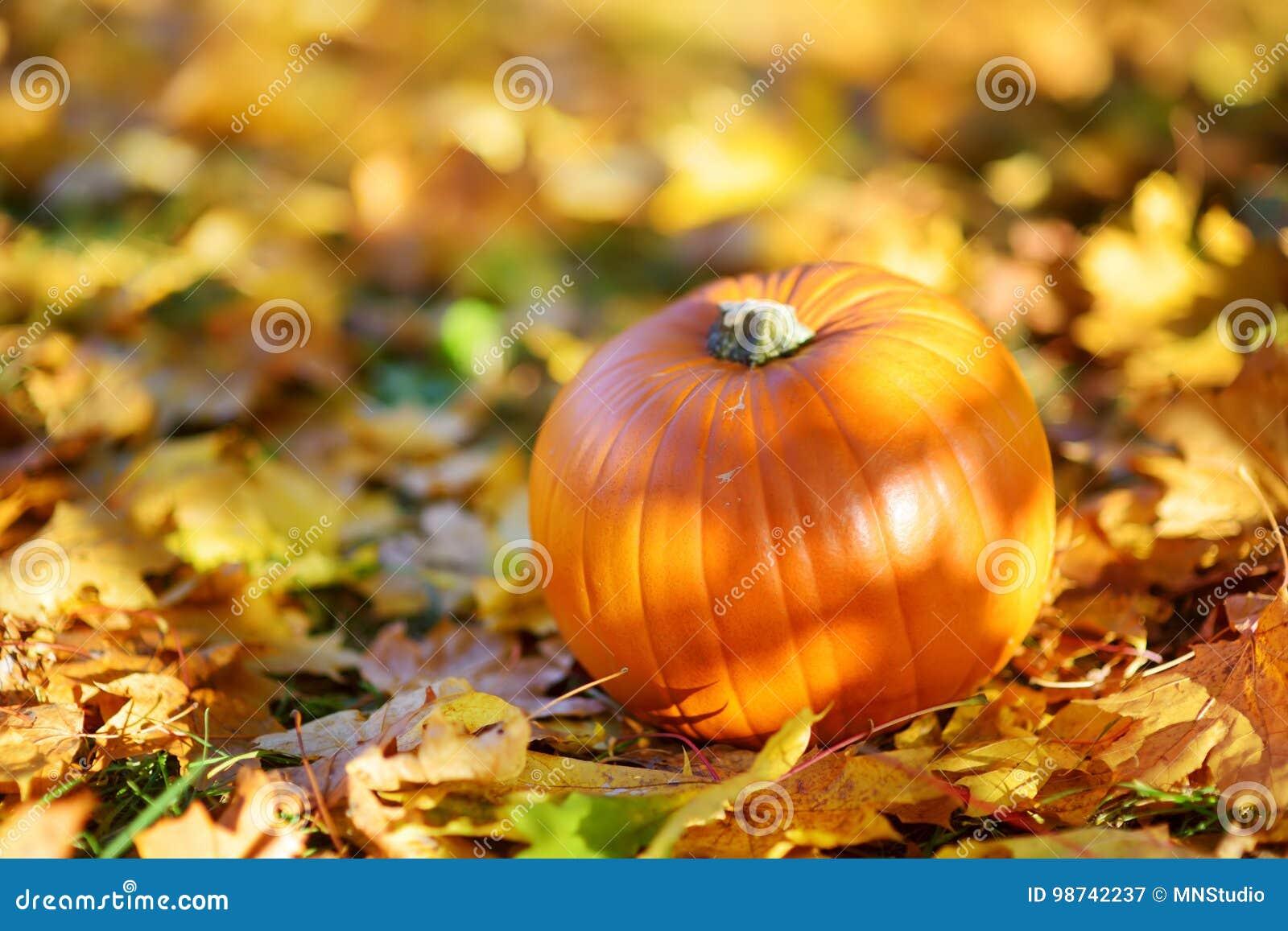 Calabaza anaranjada grande que pone en la tierra cubierta con las hojas de otoño