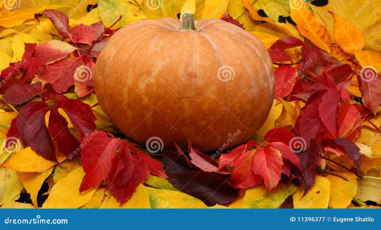 Calabaza de Víspera de Todos los Santos en hojas coloridas