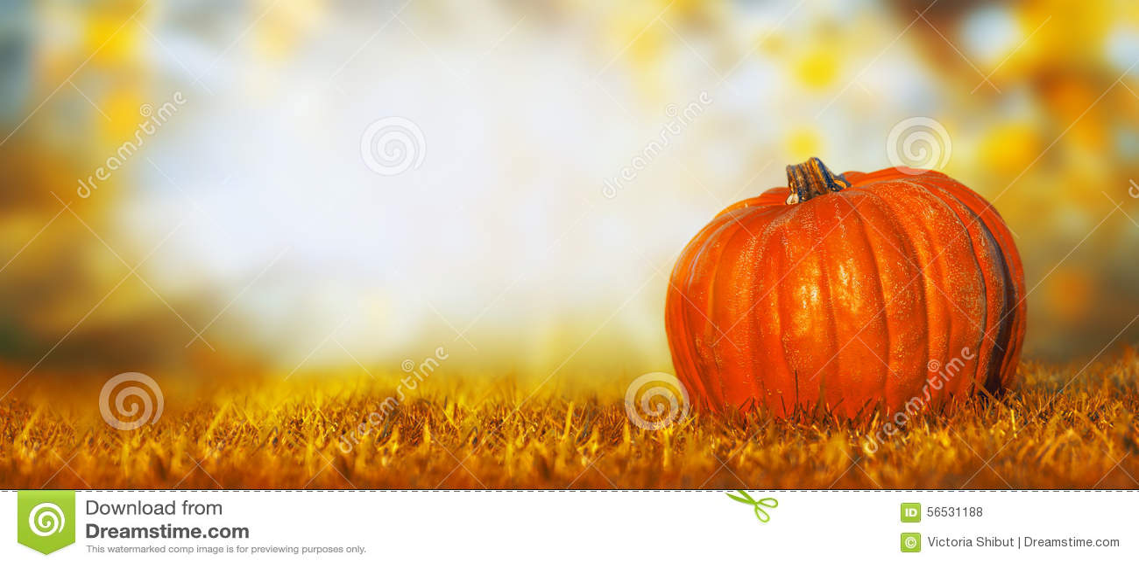 Calabaza grande en césped sobre el fondo de la naturaleza del otoño, bandera