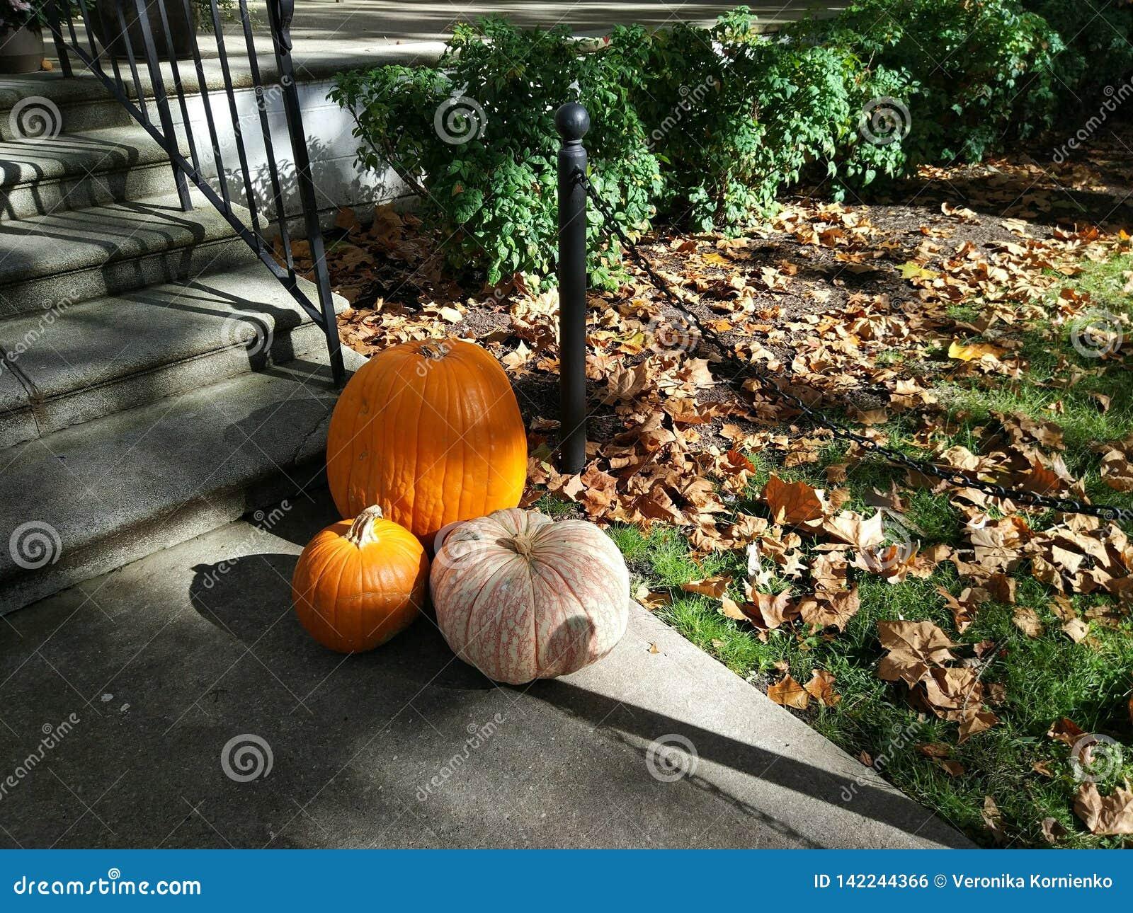 Calabazas de Halloween cerca de la casa, alcohol del otoño
