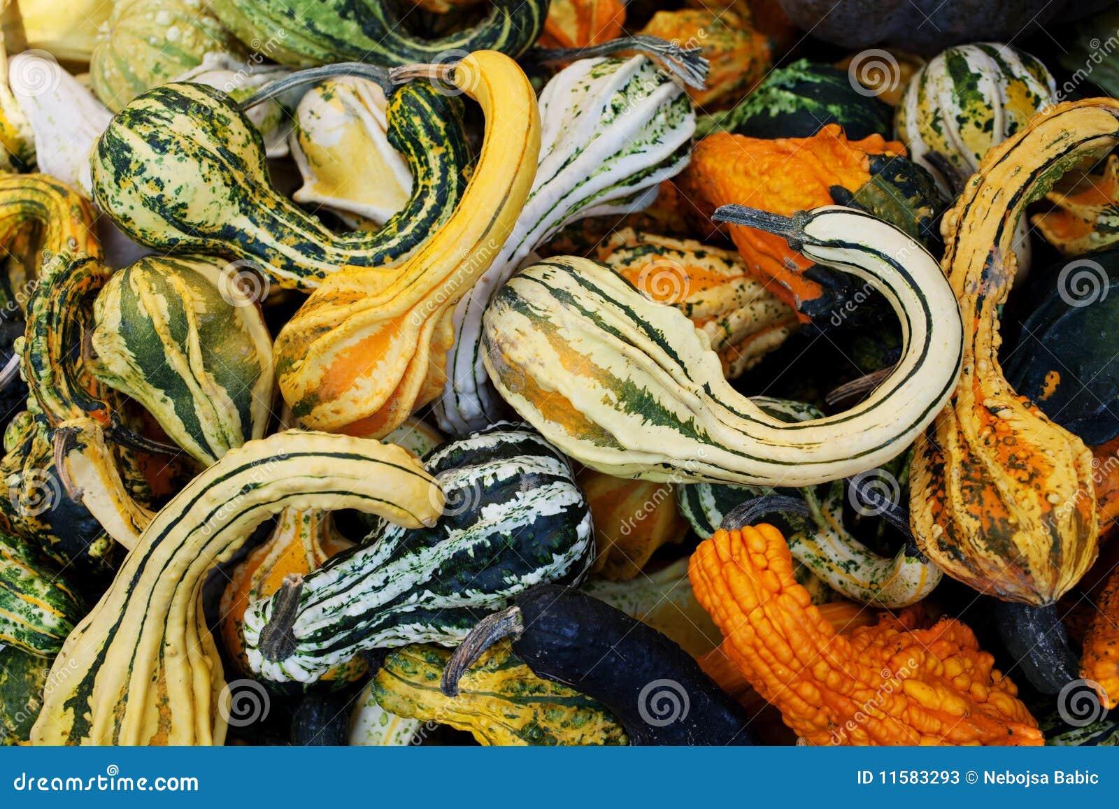 calabazas decorativas fotos de archivo imagen 11583293