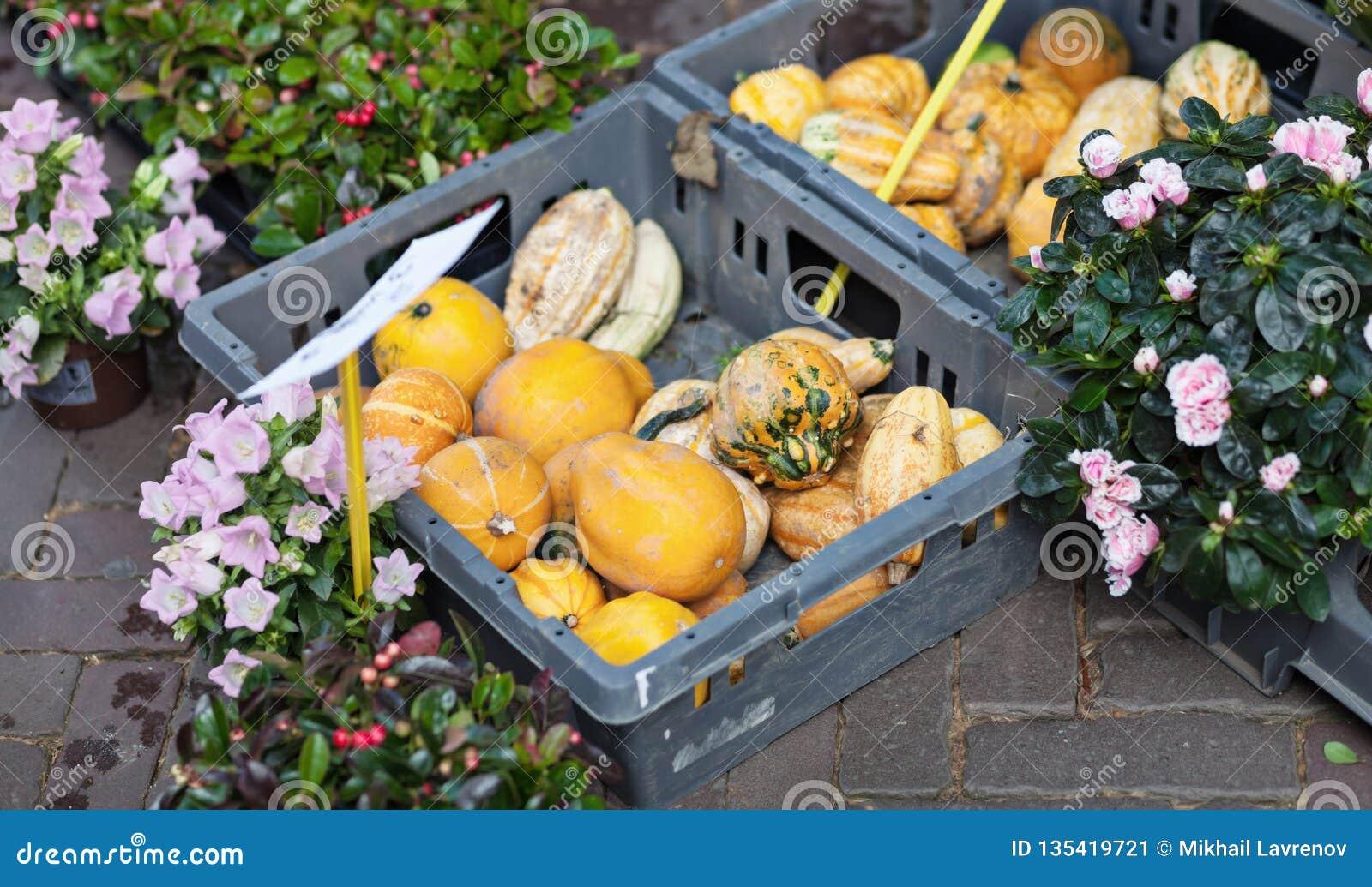 Calabazas y flores en el mercado callejero abierto