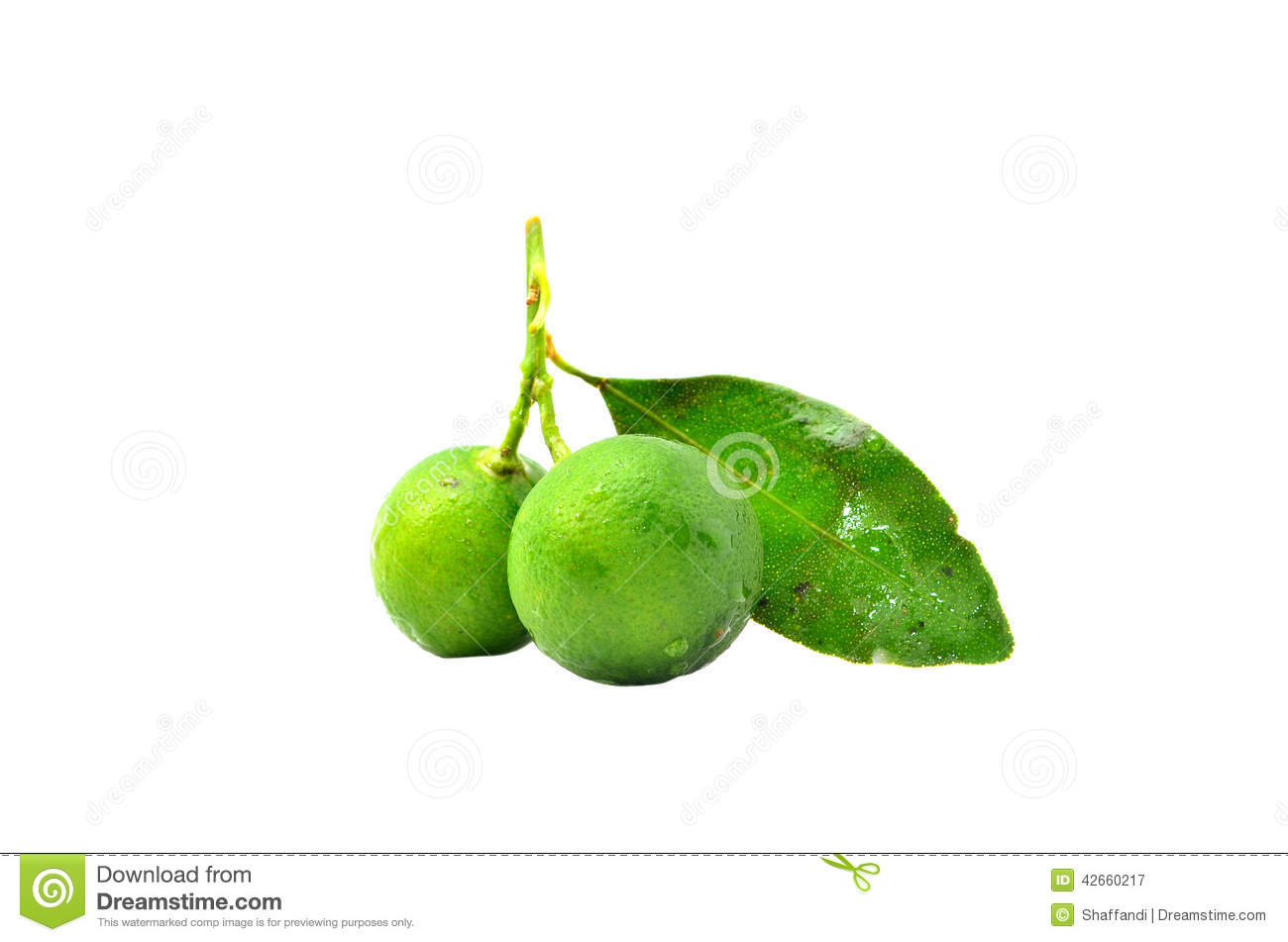 calamansi production The philippine calamansi association, inc (pcai) recently said that research and development (r&d) programs should address the declining production of calamansi in.