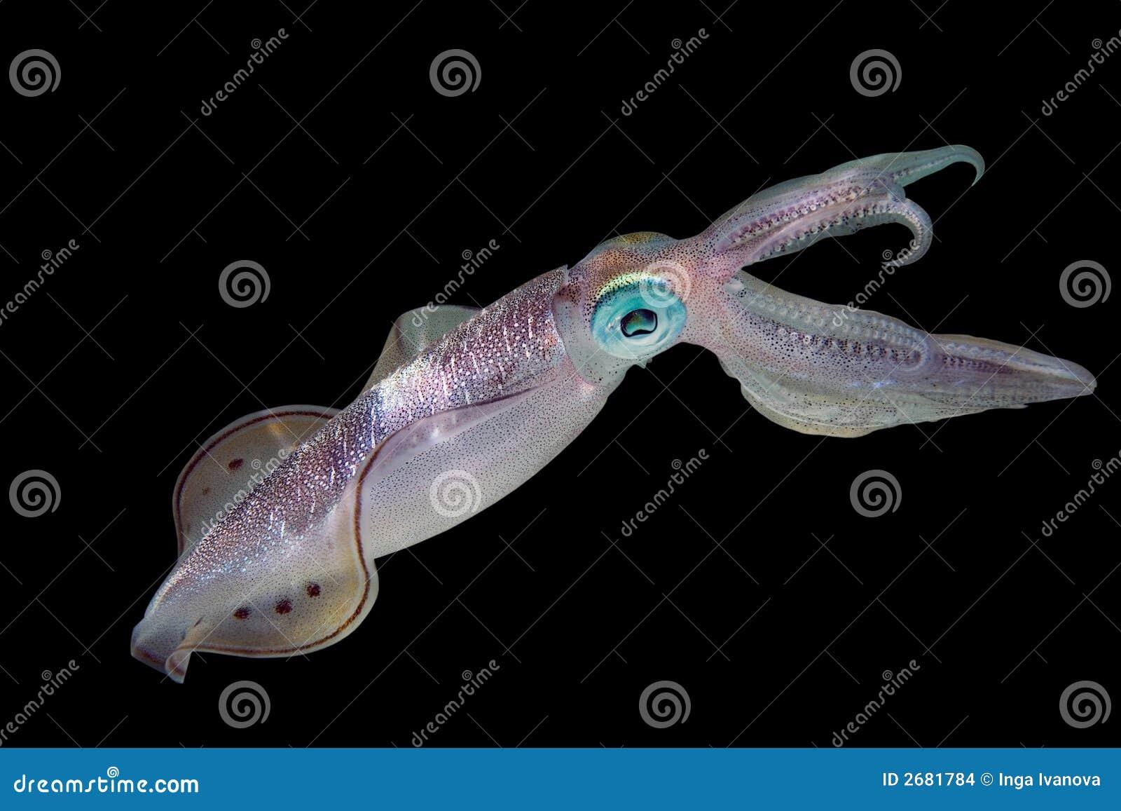 Calamar en fondo negro