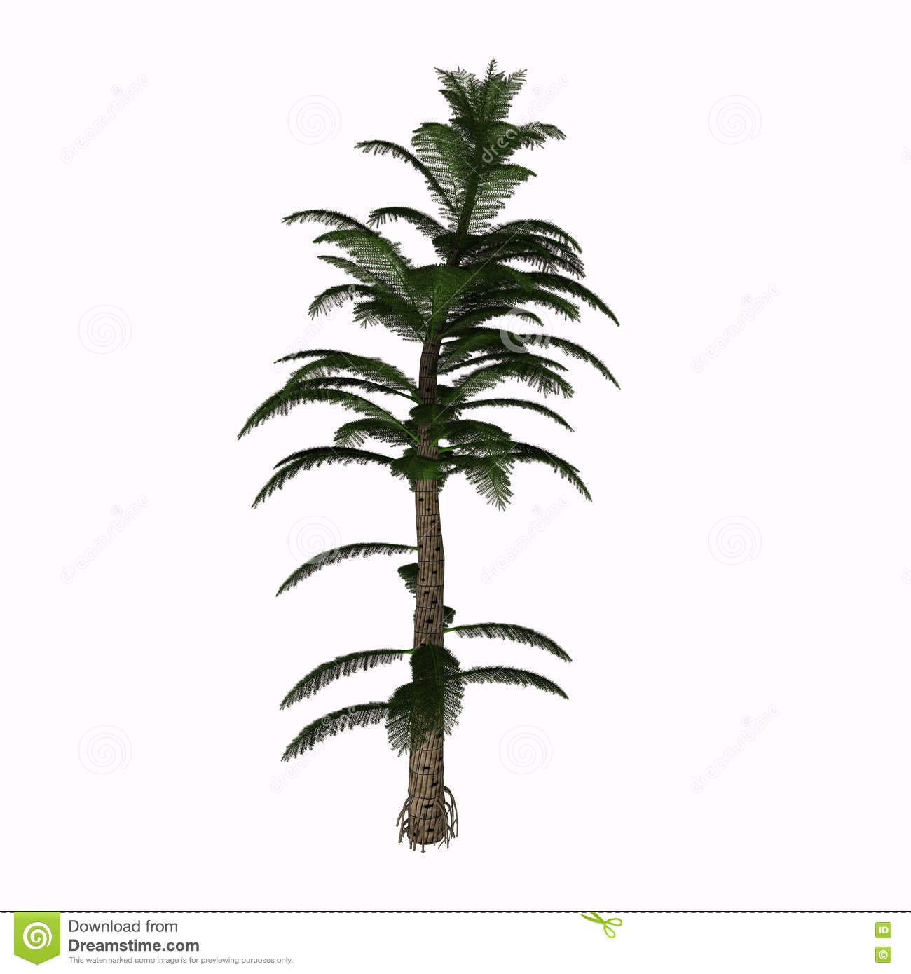 Calamitea Striata Tree Stock Illustration Illustration Of Green