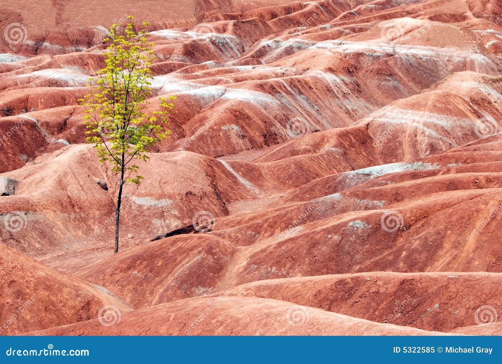 Download Calanchi Con Un Albero Solo Immagine Stock - Immagine di verde, nudo: 5322585