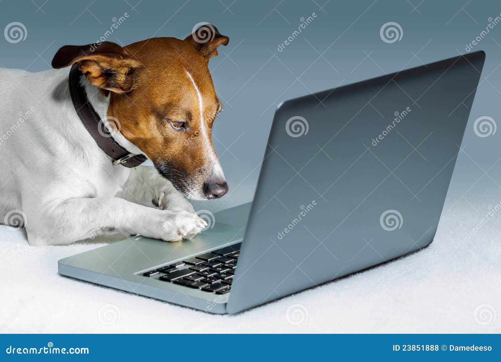 Calcolatore del cane