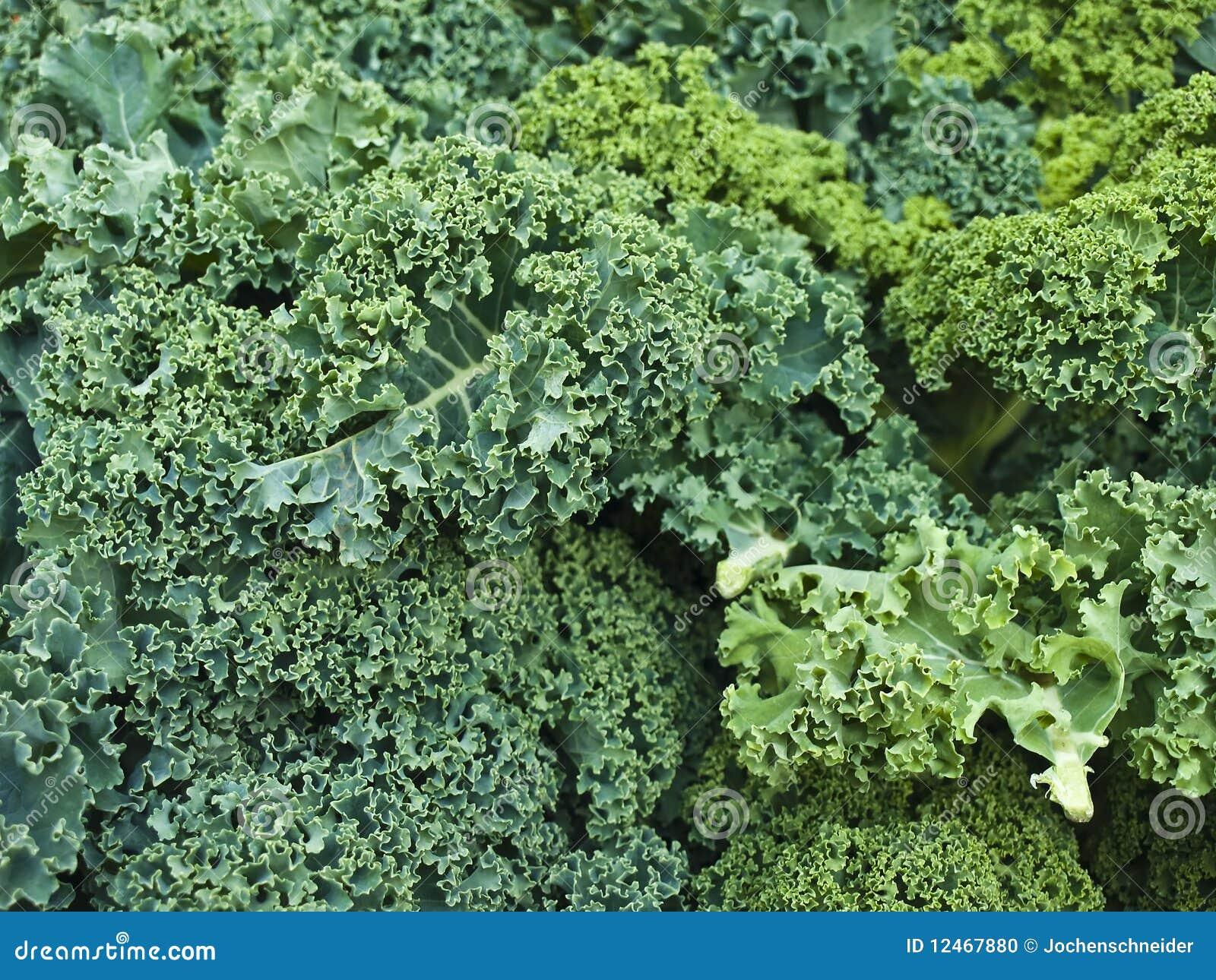 cale verde foto de archivo imagen de sopa cooking vegetariano 12467880. Black Bedroom Furniture Sets. Home Design Ideas