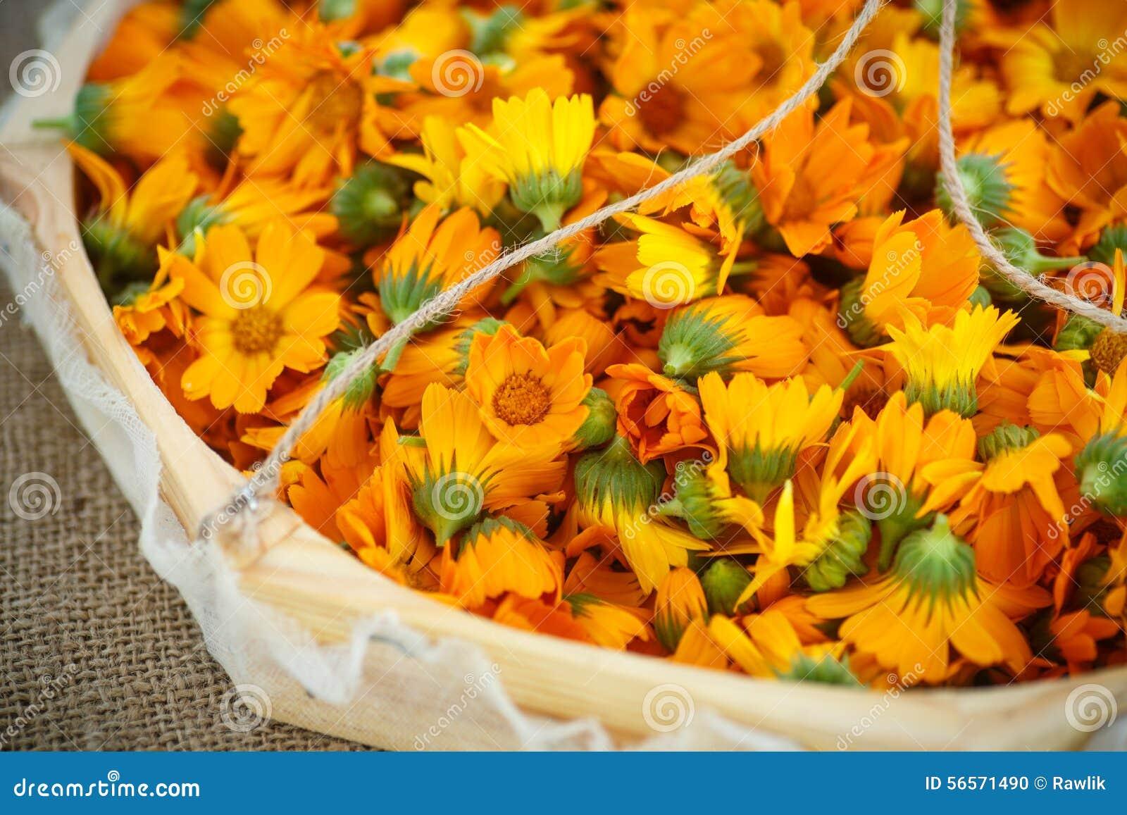 Download Calendula στοκ εικόνες. εικόνα από λουλούδι, burlap, συστατικό - 56571490