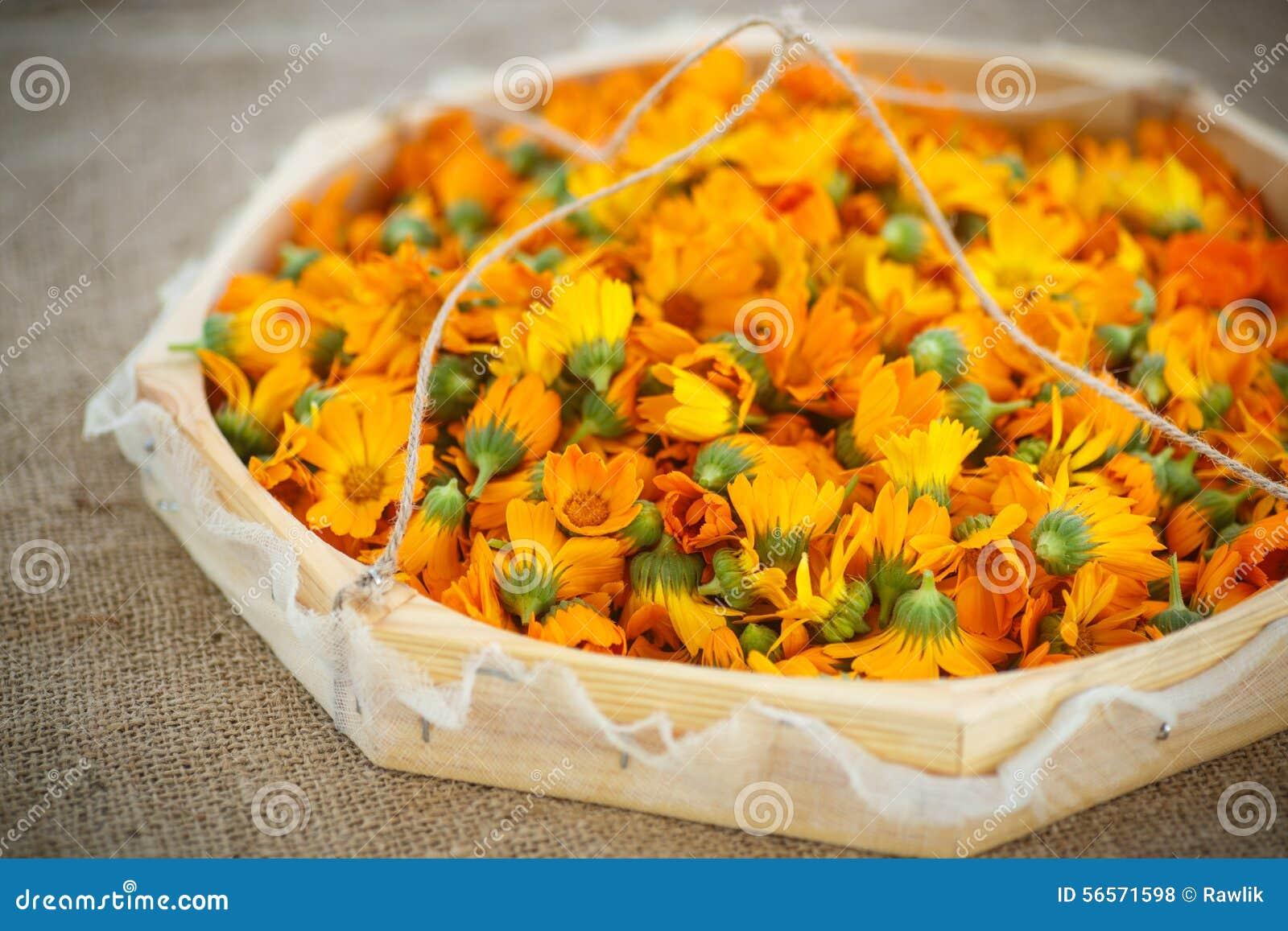 Download Calendula στοκ εικόνες. εικόνα από floral, ξήρανση, κεφάλι - 56571598