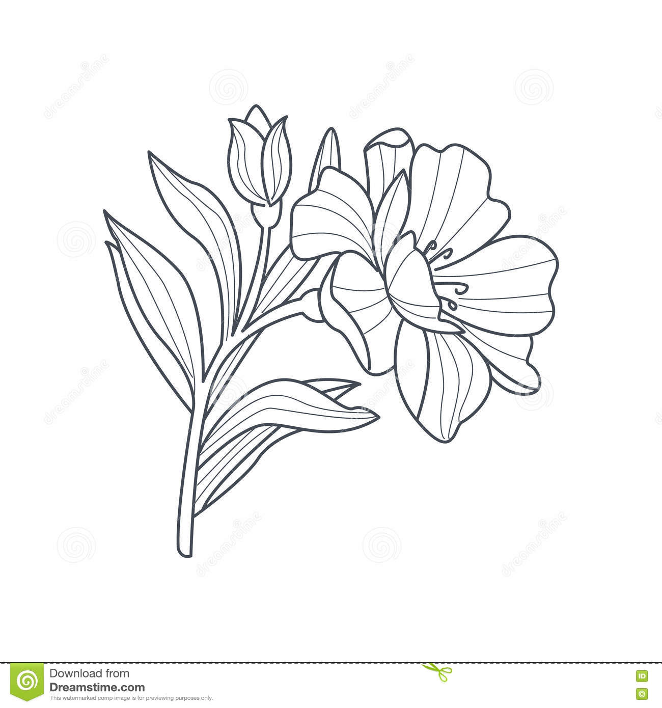 Marigold Flower Line Drawing : Monochrome drawing of a wolverine with patterns line art