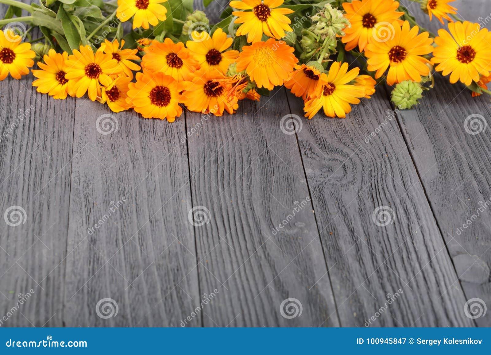 Calendula Officinalis Fiore del tagete con la foglia su fondo di legno nero con lo spazio della copia per il vostro testo