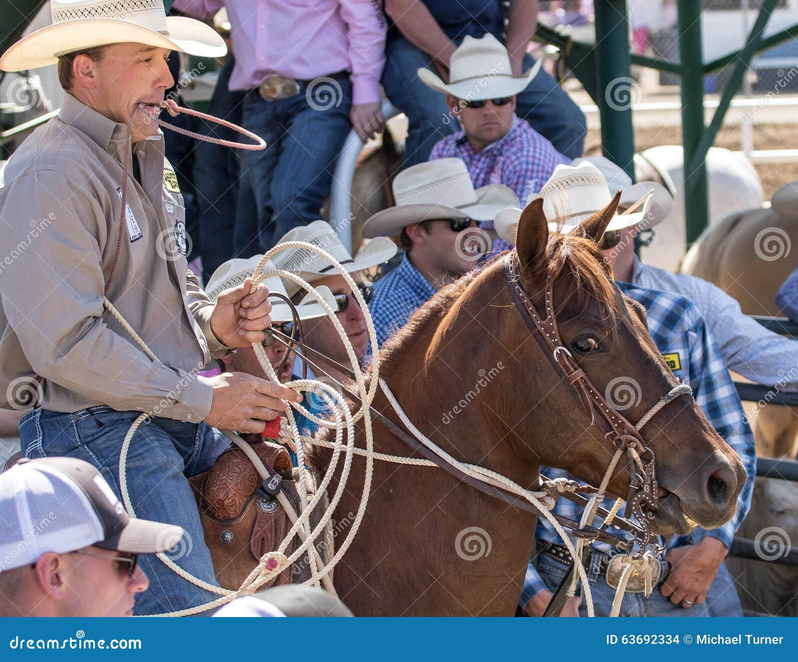 Calf Roping Cowboy Editorial Stock Image Image Of April