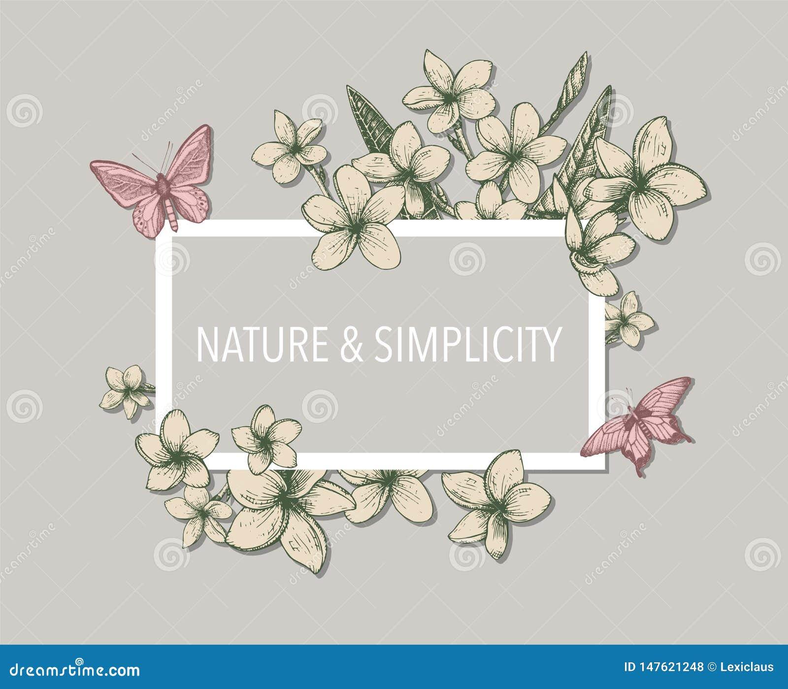 Calibre floral tropical avec les groupes, les fleurs et les feuilles tirés par la main du plumeria et des papillons Perfectionnez