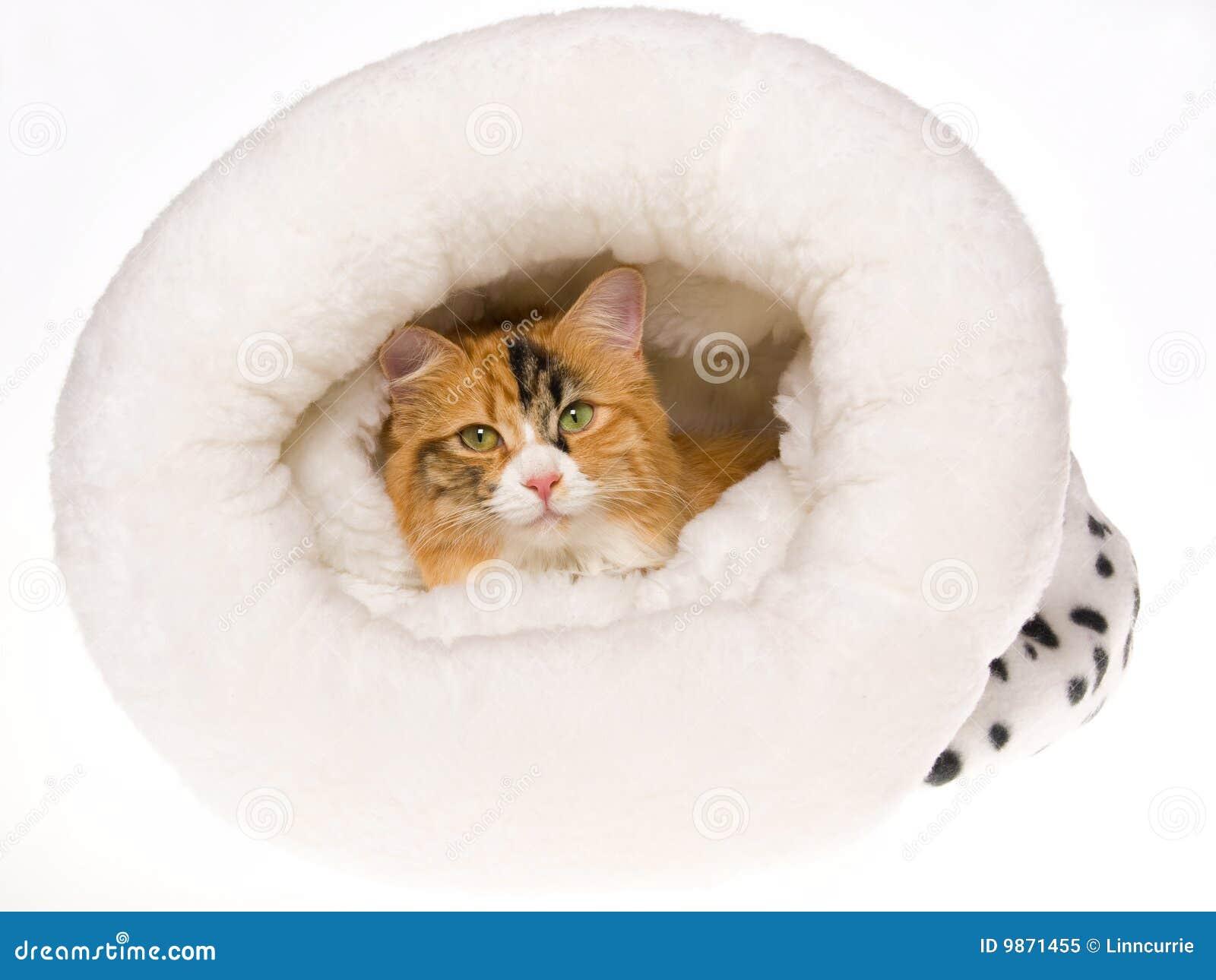 gamo silent cat vs whisper