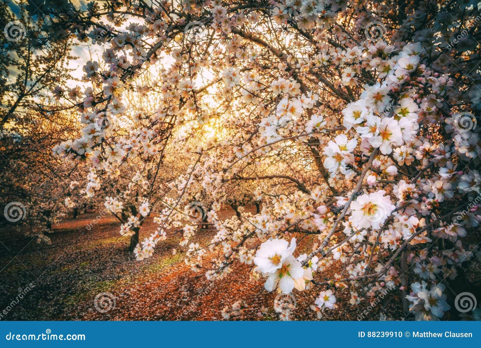 California Blossom Trail