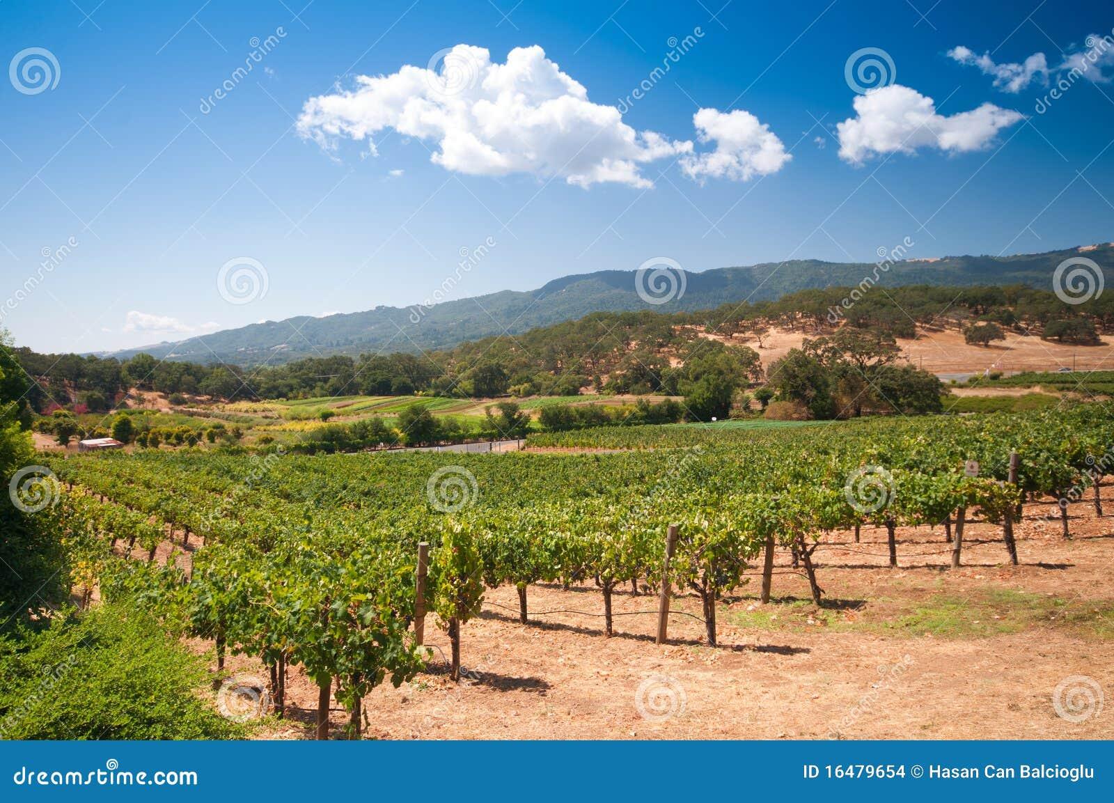 California napa winnica