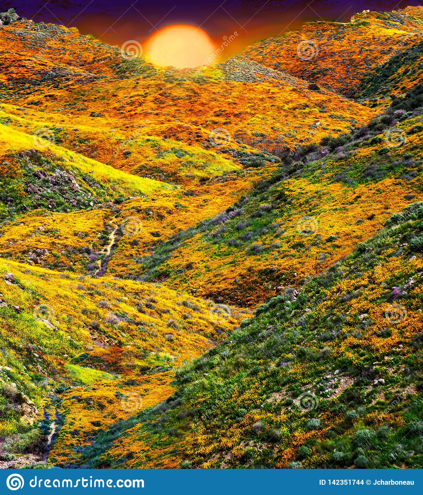 California Poppy fields landscape, sun creasting on the horizen casting a gloden glow over colorful hills and valleys.