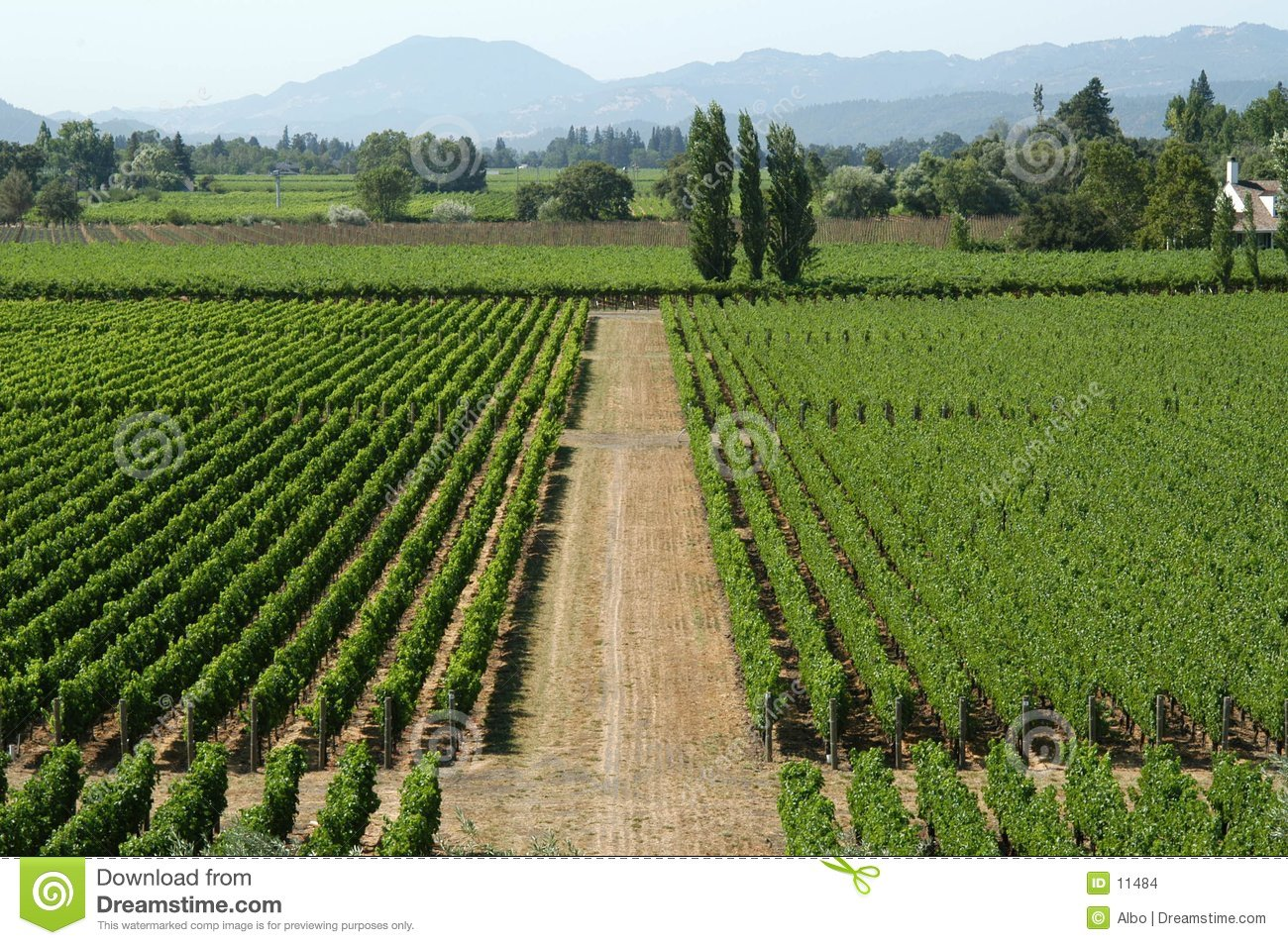 California vineyard