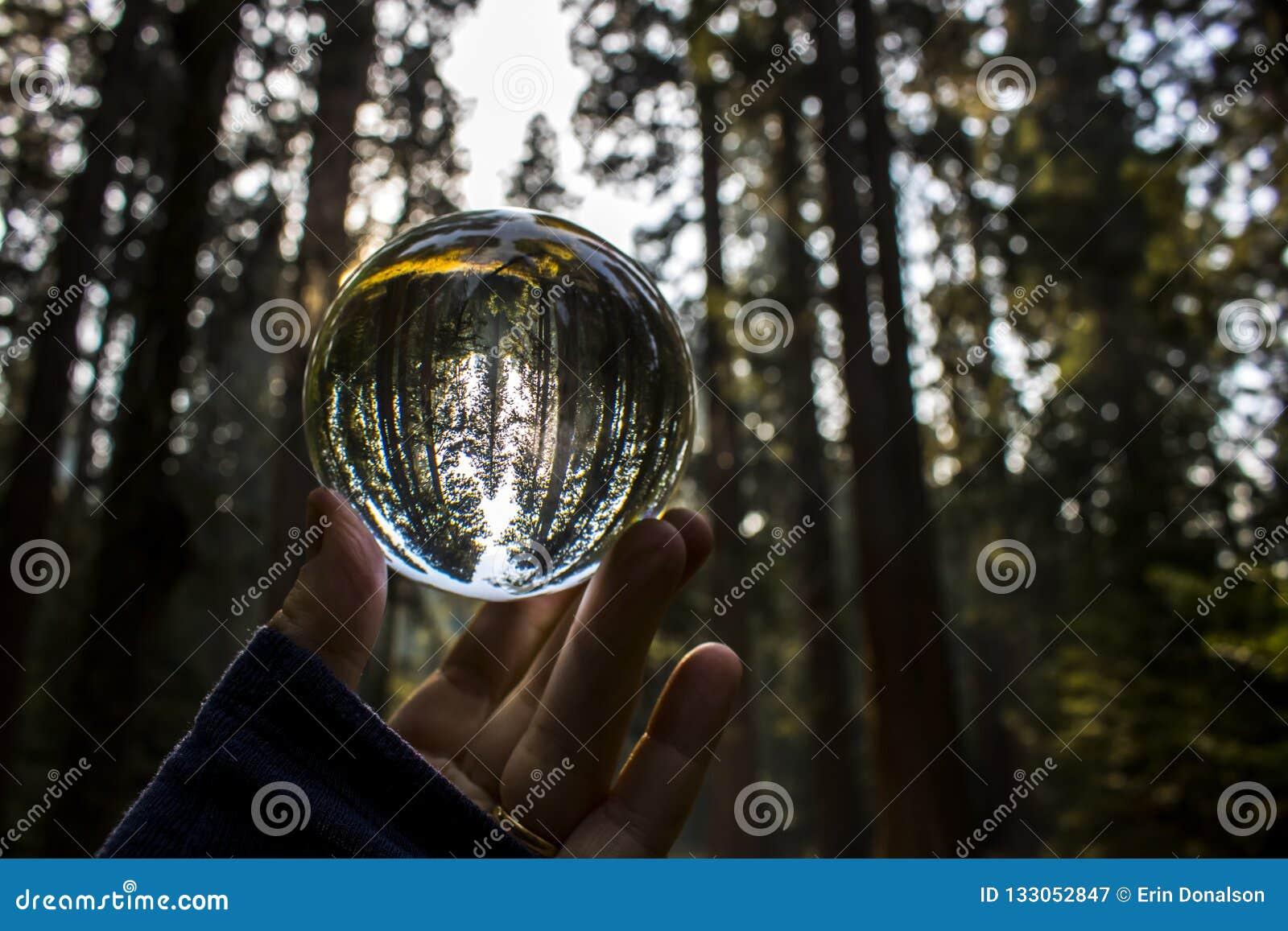 Californische sequoia Forest Captured in de Bezinning van de Glasbal in Fingert wordt gehouden die