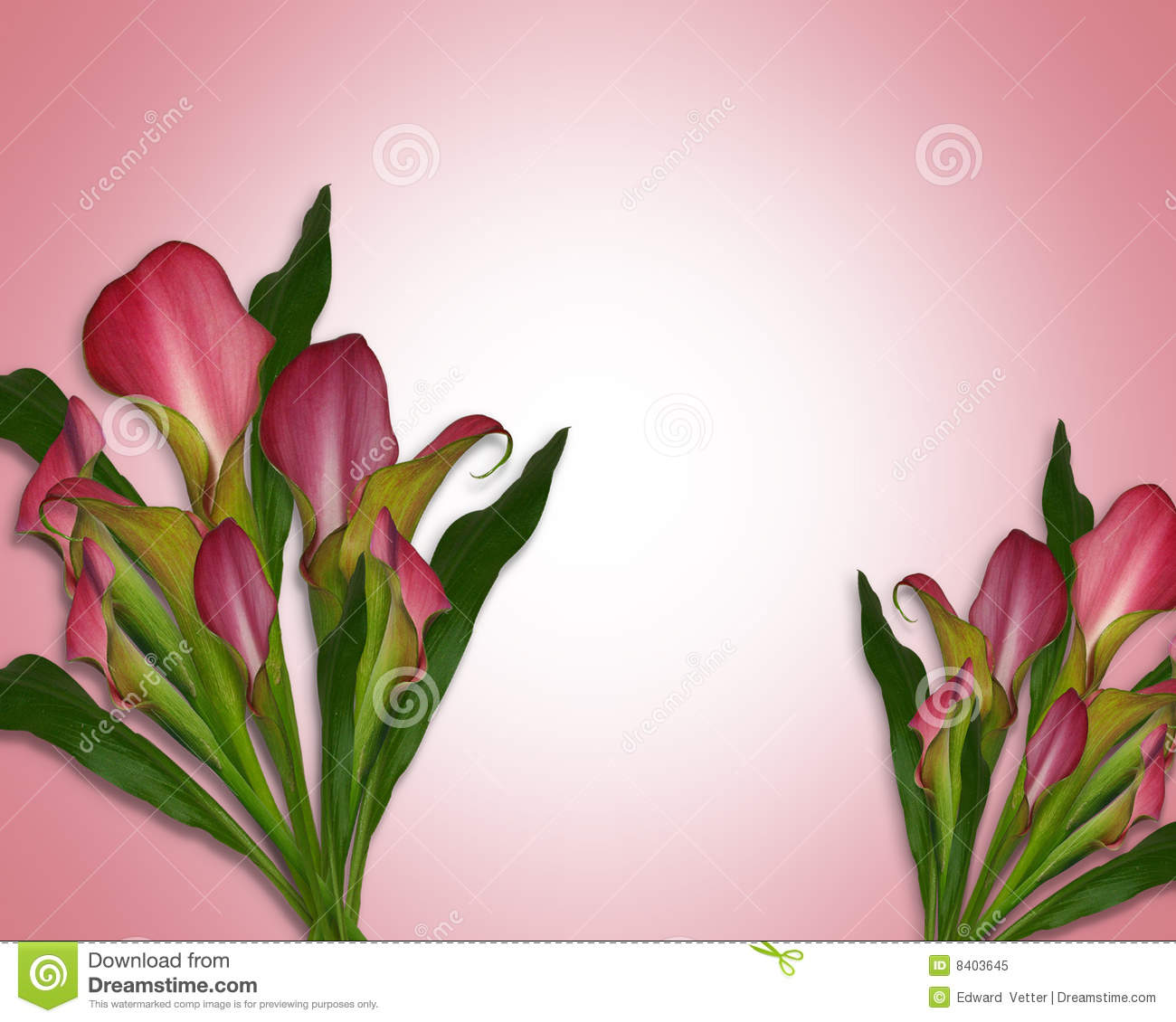 calla lilies background or border royalty free stock photo