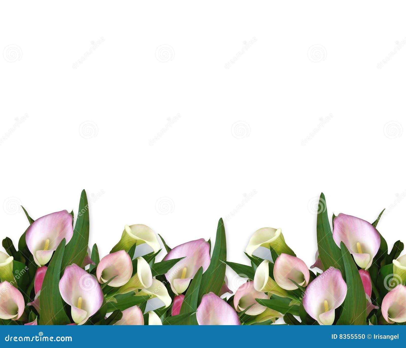 calla lilies border stock photo