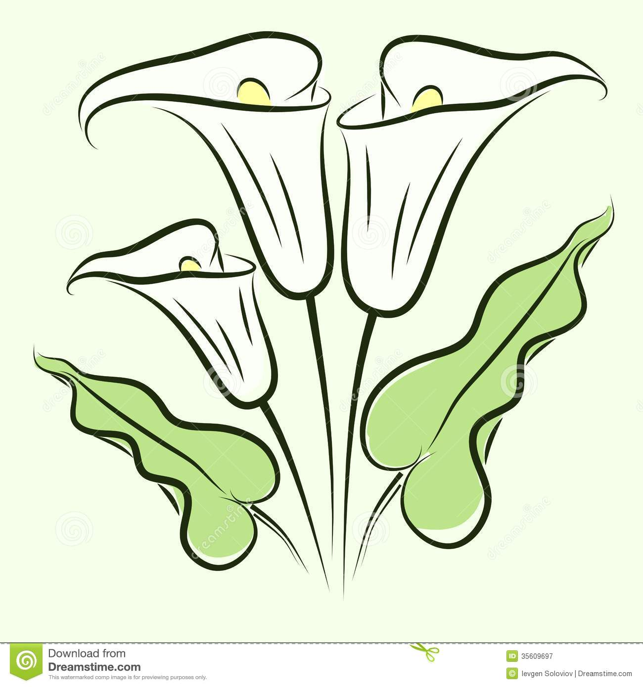 Uncategorized Calla Lily Drawings calla lily color royalty free stock photography image 35609697 photo download lily