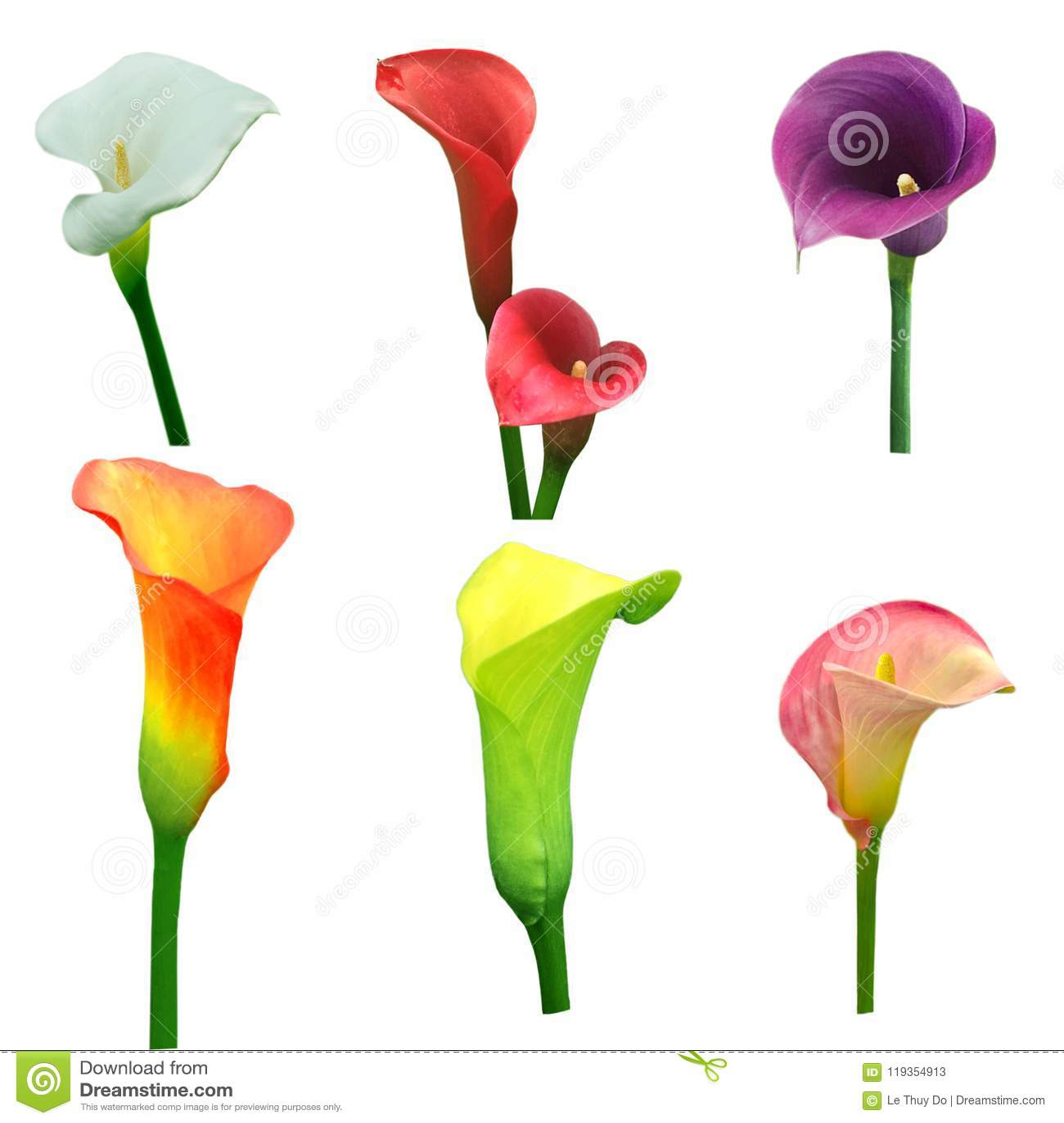 Calla Lily Flower Set Stock Image Image Of Curve Orange 119354913