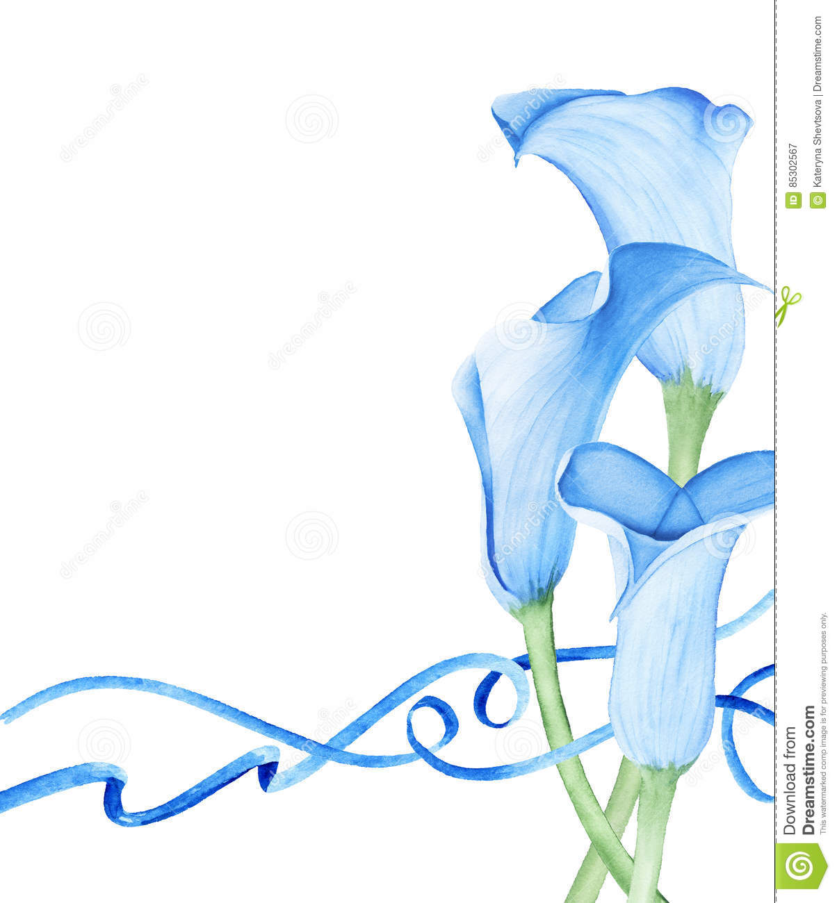 Calla Lily Flowers And Blue Ribbons Stock Illustration