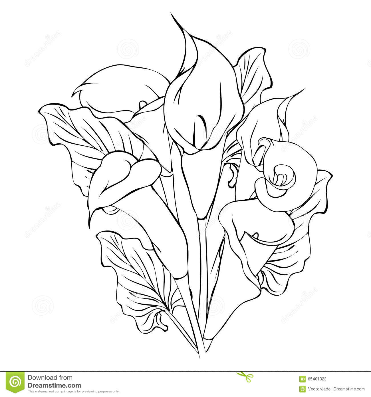 Calla Lily Flowers Stock Vector Illustration Of Petal 65401323