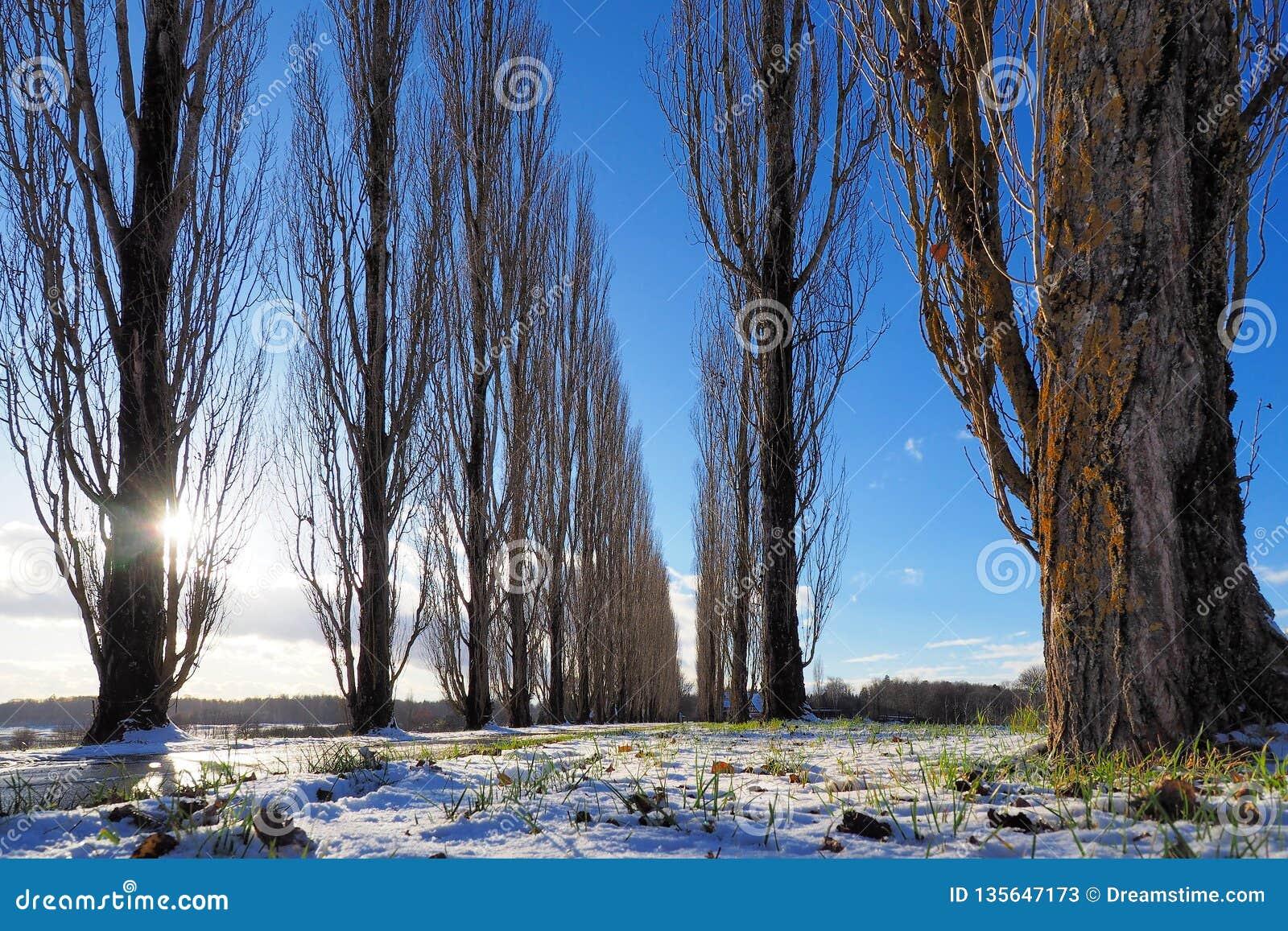 Callejón del campo en un día de invierno fino