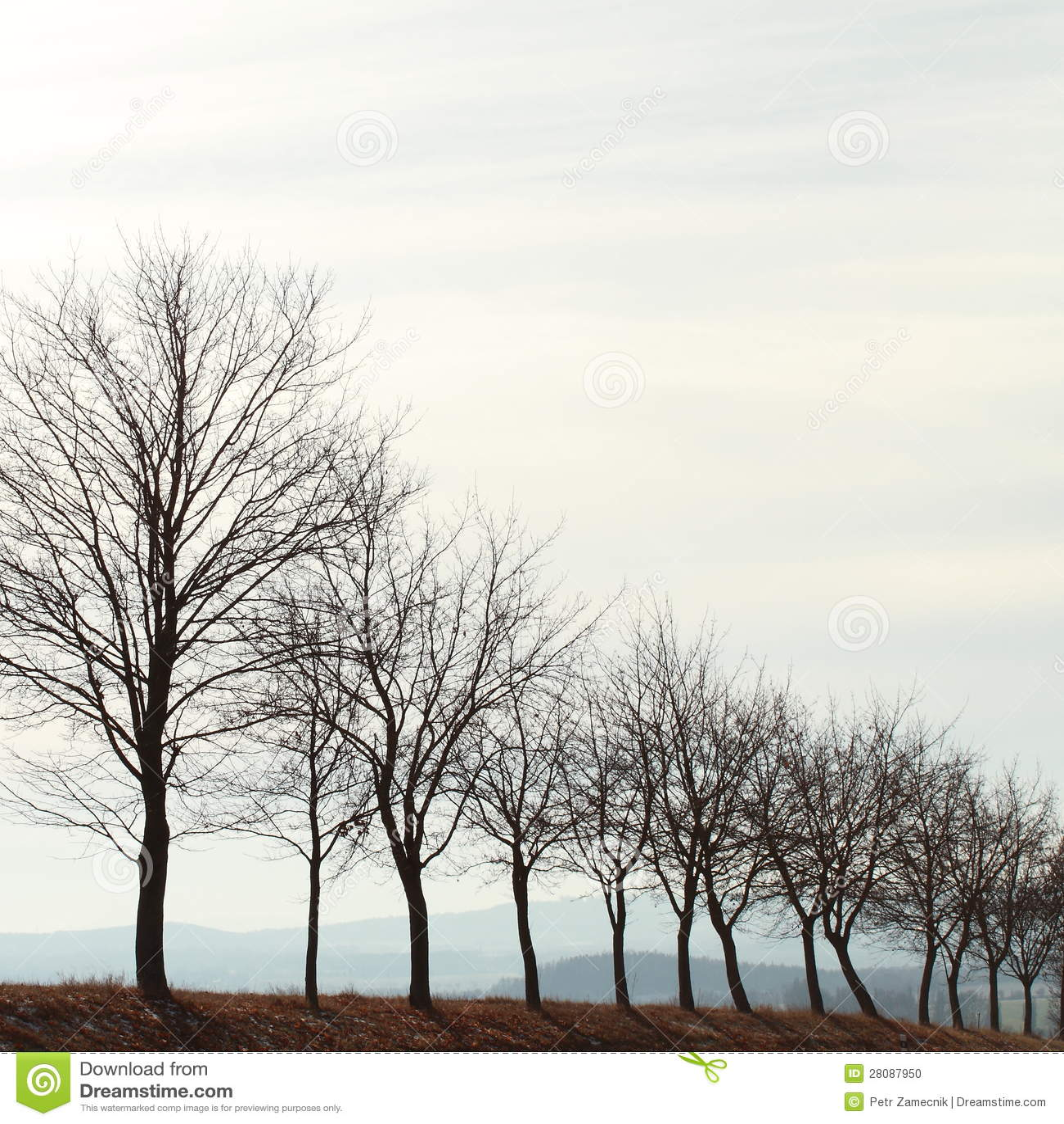 Callej n del invierno sin nieve foto de archivo imagen for Arboles en invierno