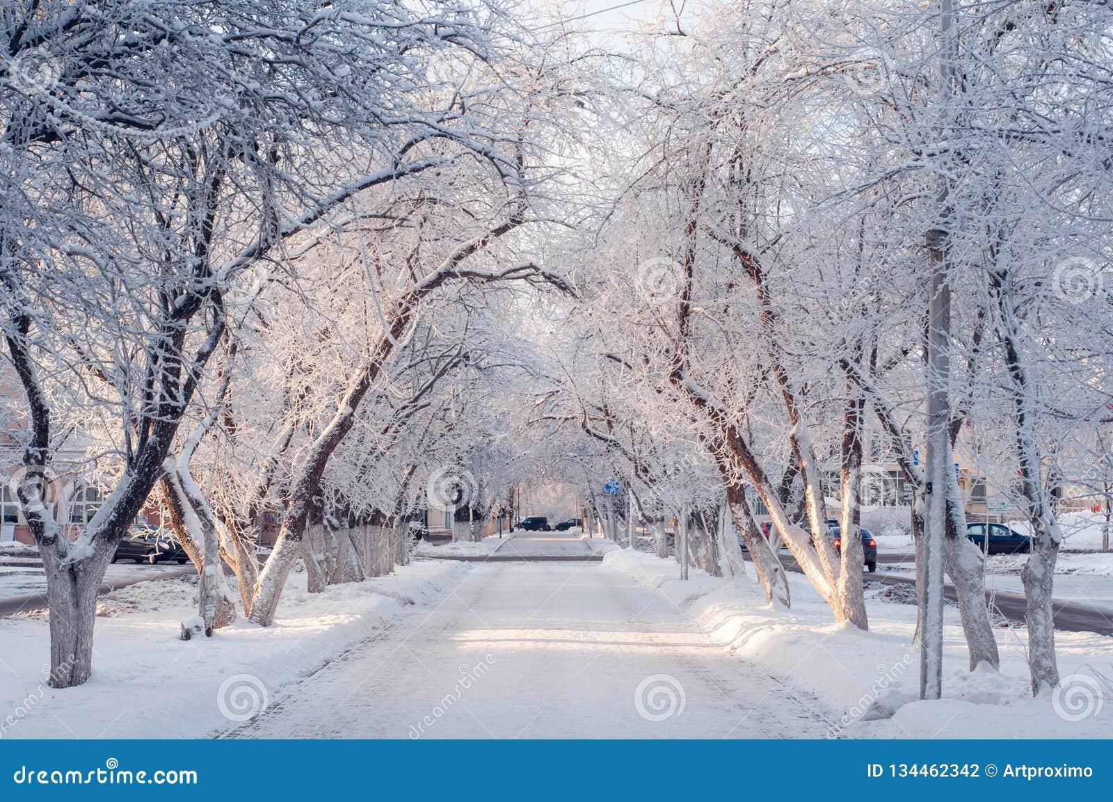 Callejón hermoso en un día soleado, árboles de la ciudad del invierno en la nieve