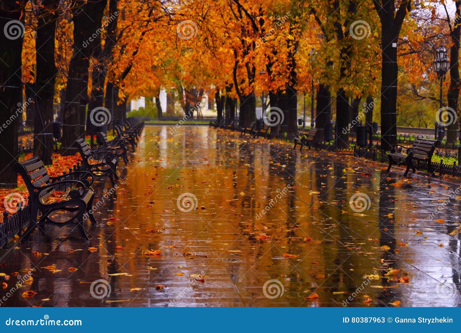 Callejón urbano del otoño con los árboles de castaña amarillos de los árboles en los lados en la lluvia
