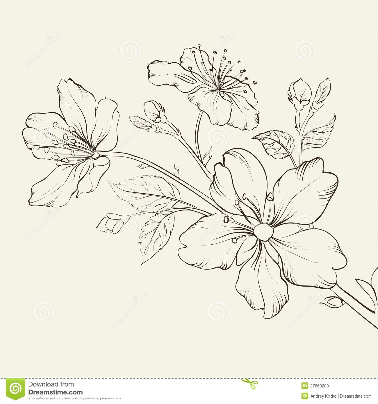 Calligraphy Cherry Blossom. Royalty Free Stock Images - Image ...