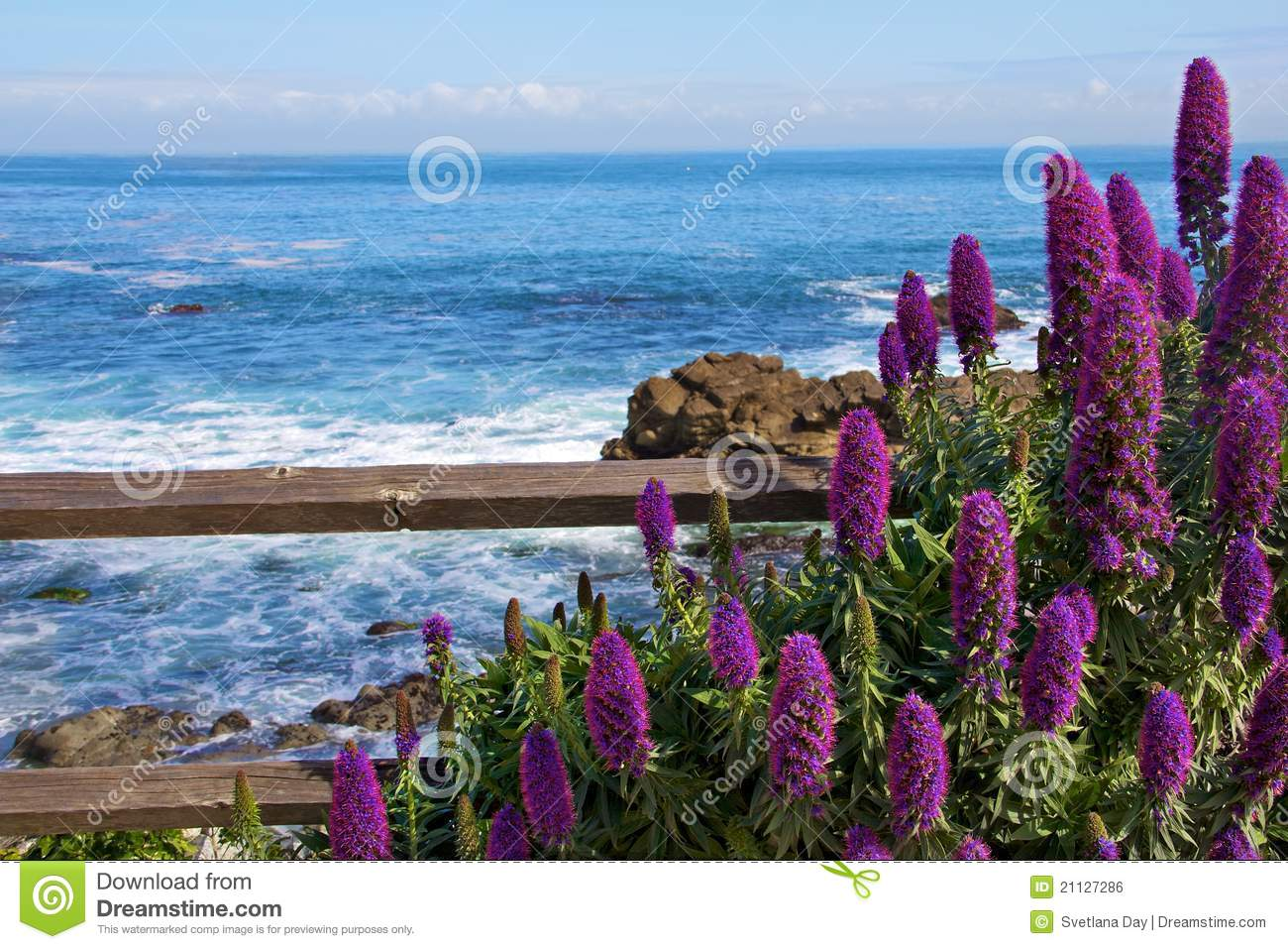 Calm Ocean With Purple Flowers In The Foreground Royalty