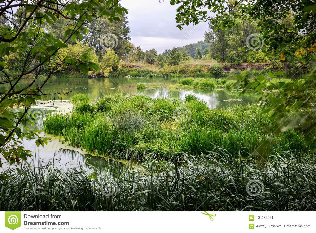 Calm river in the summer morning with green trees on background