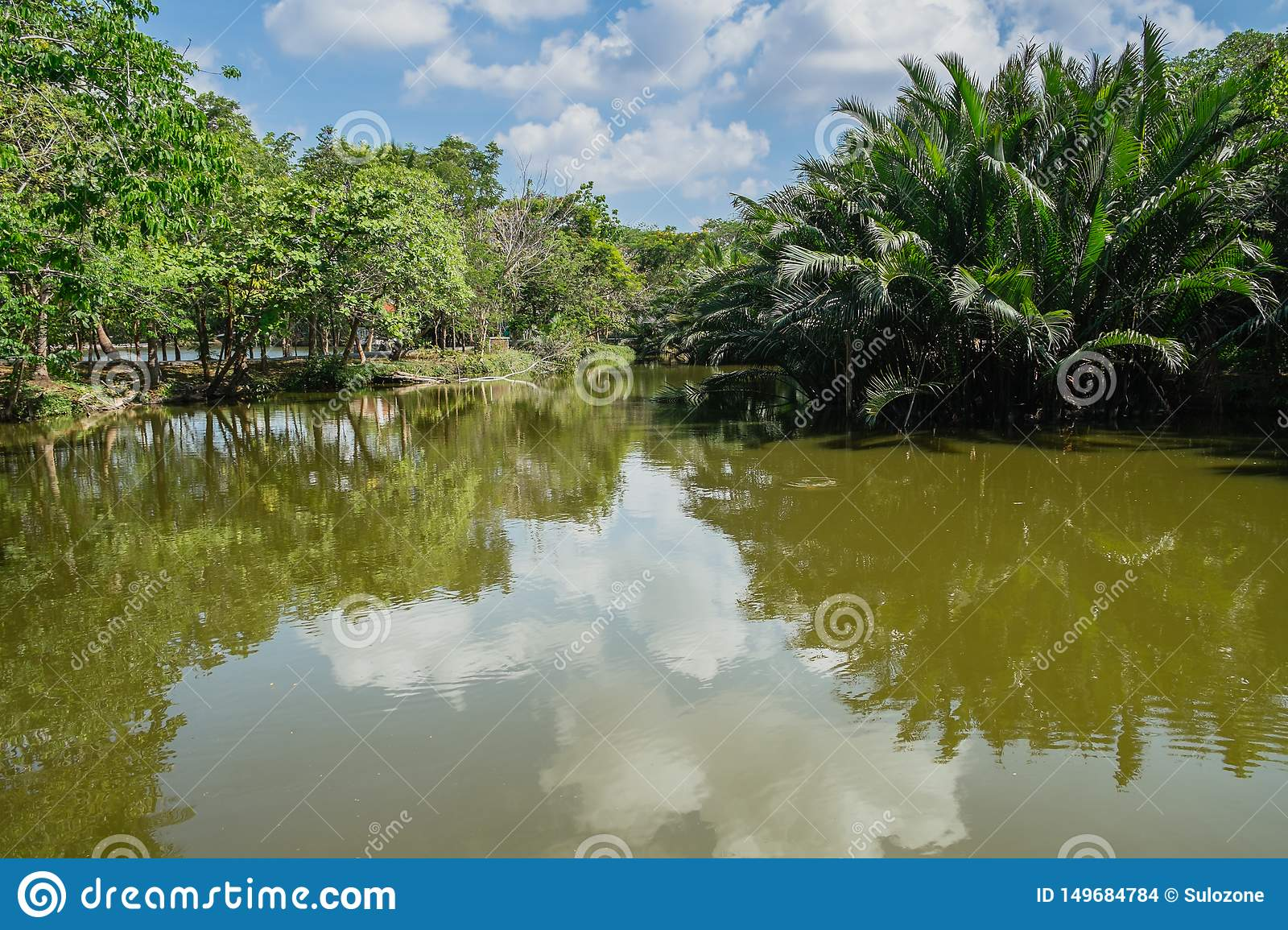 Creek flowing through palm grove with reflection of clouds and sky in the water.