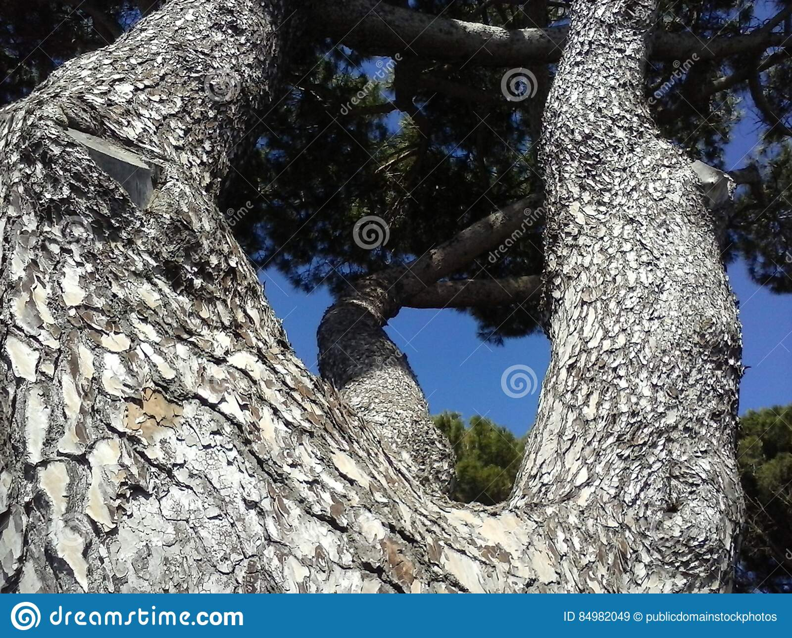 Download CAM06959 stock image. Image of photo, pine, image, 免费 - 84982049