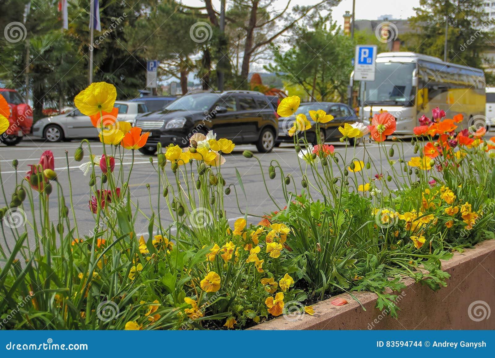 Cama de flor con las flores al lado del camino