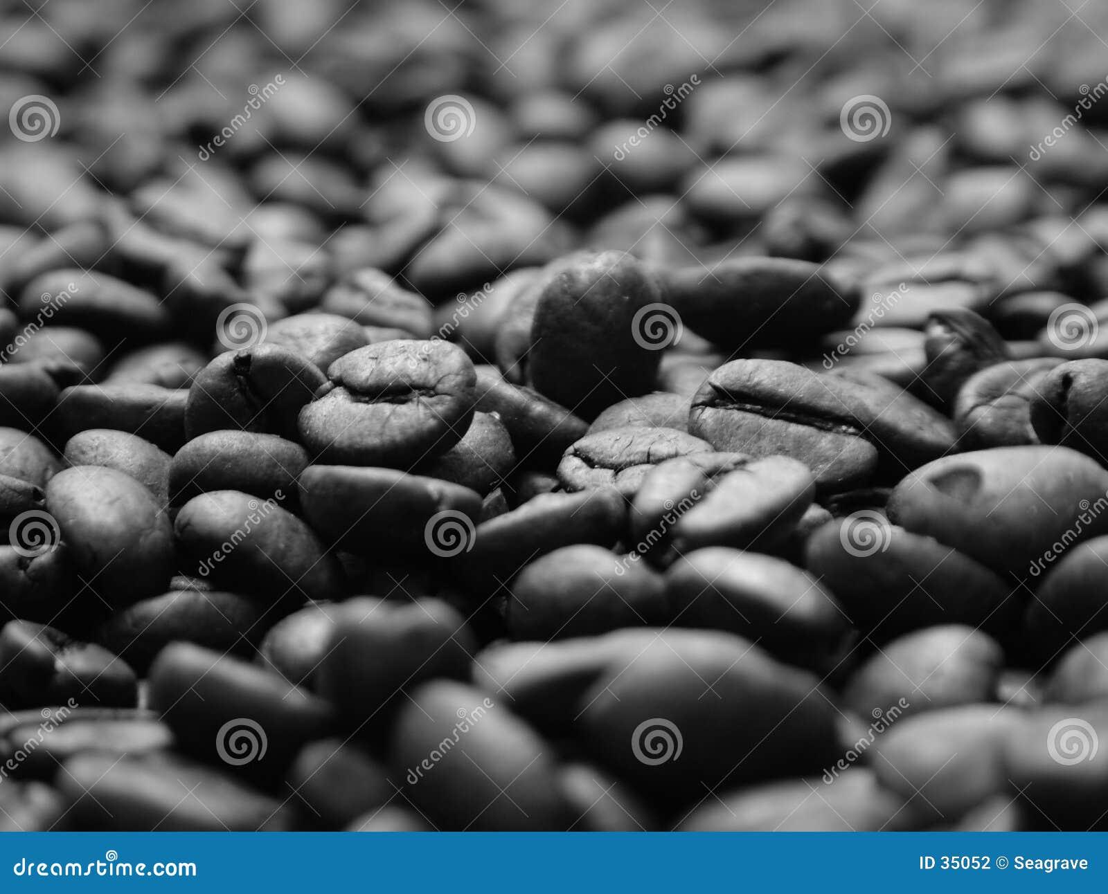 Download Cama de habas foto de archivo. Imagen de alimento, café - 35052